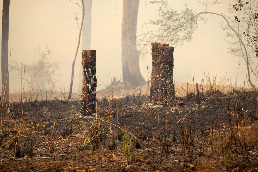 Burnt stumps and smoke after control burn, Warrandyte