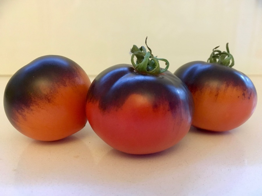 Three red and black heirloom tomatoes