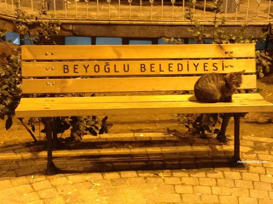 cat on timber bench in streets of Istanbul at night