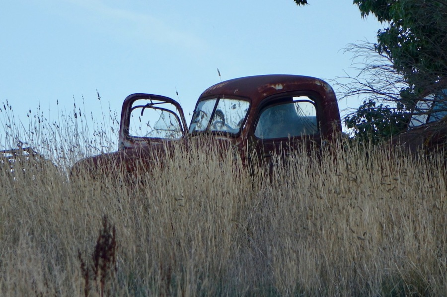 rusted old truck in long grass